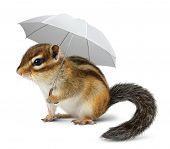 Funny chipmunk with umbrella on white weather concept poster