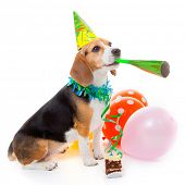 dog party animal celebrating birthday or anniversary poster