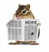 Funny chipmunk read newspaper , news concept poster