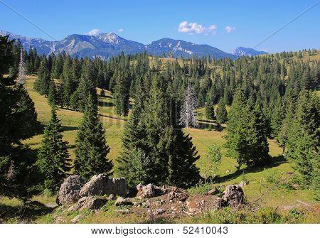 Velika Planina Forests Landscape, Slovenia