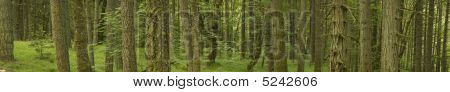 Environmental Tree Landscape Banner Panorama