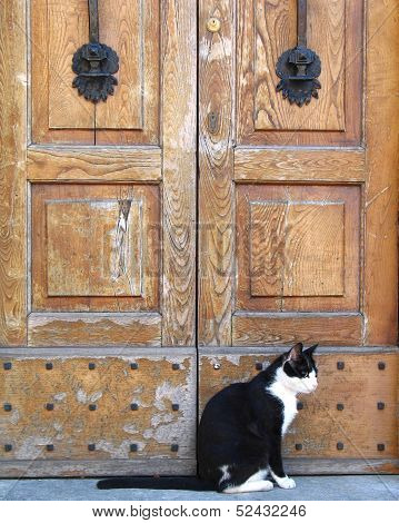 Cat And The Old Doors