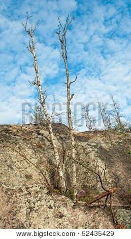 Dry Forest On Granite Rock