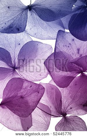 colorful flower petal closeup