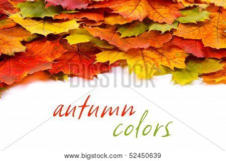 Colorful Leaf Border