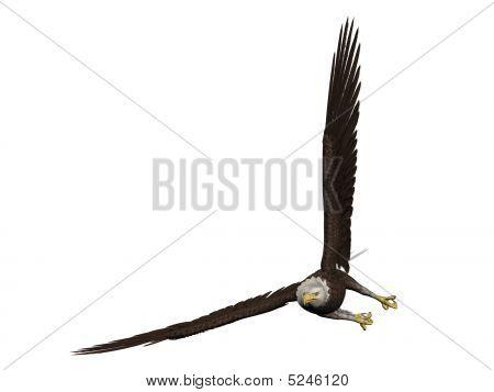 Eagleturningwbg