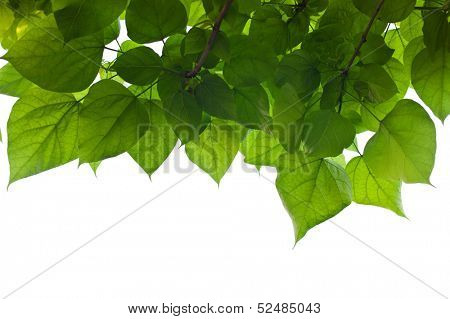 leaves and sky, symbol photo for growth, photosynthesis, spring