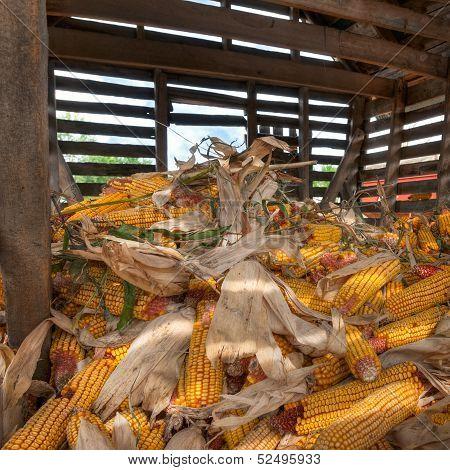 Inside The Corn Crib