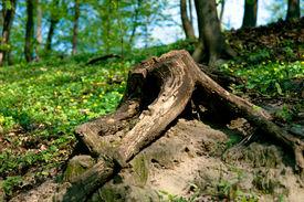 Stub In Wood