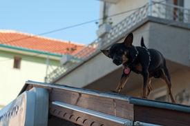 The small doggie
