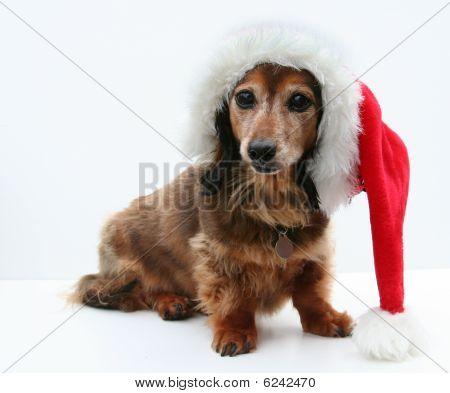 Dachshund Santa