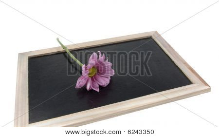Flower On Blackboard