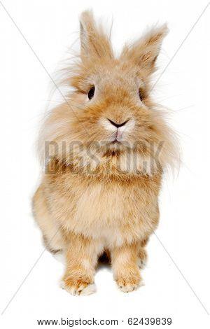 Sweet sad rabbit is sitting on a white background