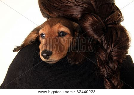 Dachshund puppy looking over a young woman's shoulder.  poster