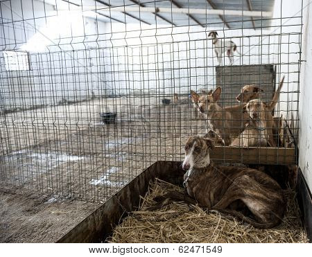 Abandoned dogs in a cage