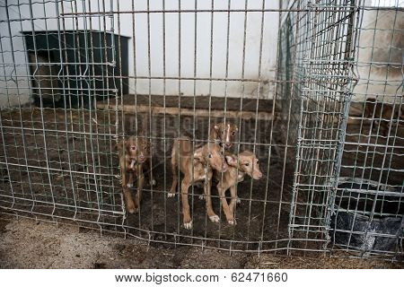 Abandoned dogs in a cage poster