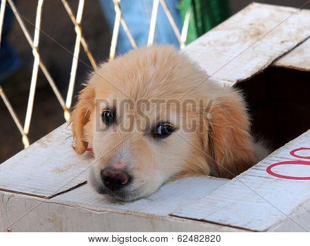 Sead Puppy