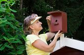 Pensioner looking in a nest box on a roof poster