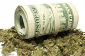 Drugs and Money Marijuana and Cannabis on White Background poster