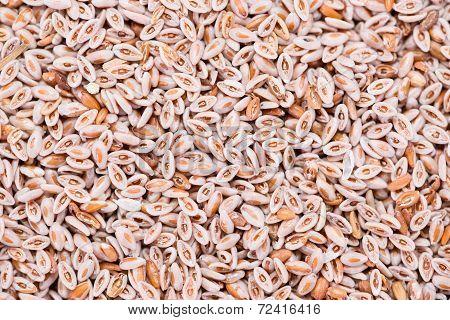 Psyllium Seeds Background