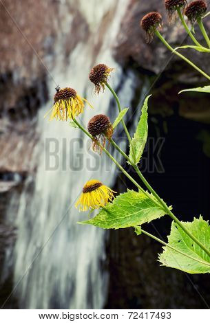 Yellow Flowers And Waterfall In The Background