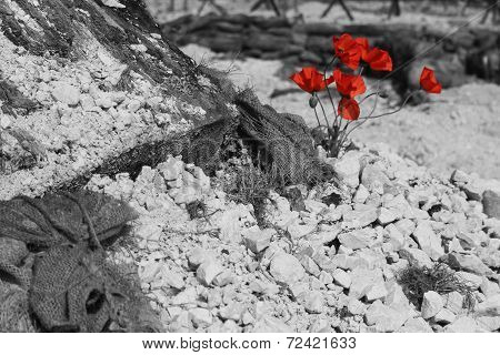 WW1 battlefield with poppies (B&W)