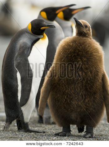 Elternschaft Pinguin