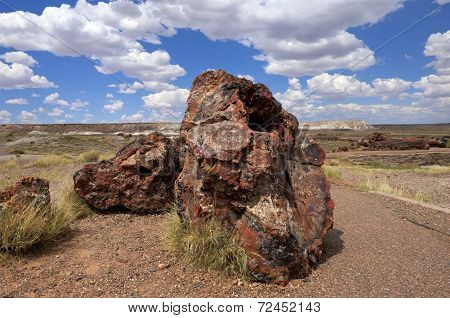 Petrified Logs, Petrified Forest National Park