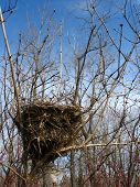 birds nest located in trees with dead trees surounding it with clear blue sky overhead. Vertical photo poster