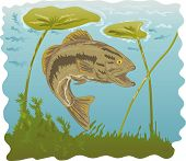 vector illustration of a largemouth bass with lilies underwater poster