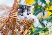 Cute little kitten sitting in a basket on the floral lawn poster
