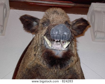Mounted Wild Boar
