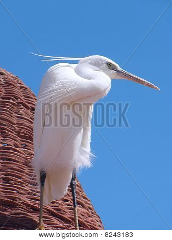 Egret on a beach umbrella on the Red Sea poster
