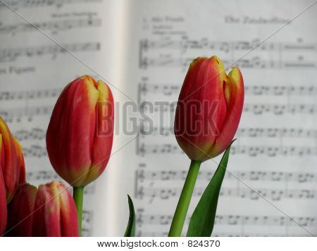 Flowers and music