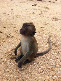 Wildlife Monkey Sitting On Sand