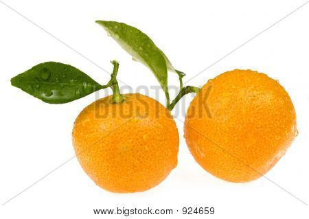 Sweet Orange Fruit. Calamondin