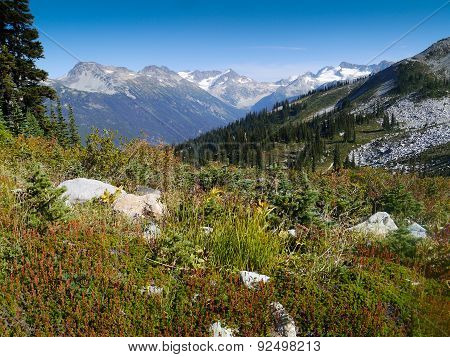 Summer in Whistlers High Alpine