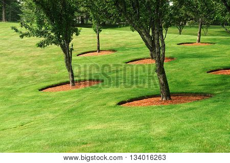 trees on green garden lawn, outdoor landscaping
