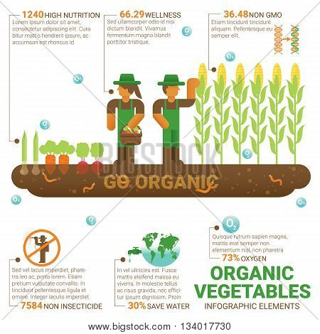 Healthy food organic vegetables infographic flat design. Knowledge healthy food concept. Cultivation. Agriculture. Organic farming. Biological farming. Save environment. World food.