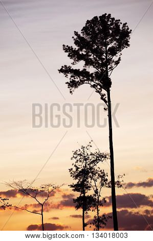 tree silhouette against colorful dusk sky for design