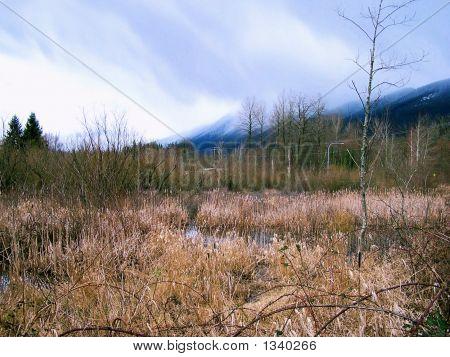 February Marsh
