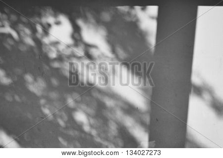 Shadow Of Tree On Raw Concrete Wall Texture