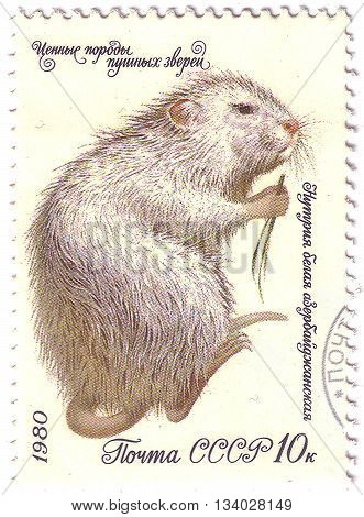 Ussr - Circa 1980: A Post Stamp Printed In The Ussr Shows Nutria With The Inscription