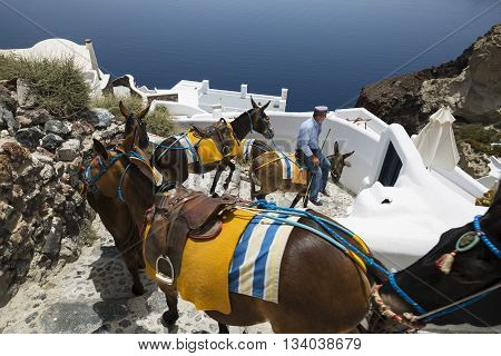 Oia ( Santorini island ) MAY 30 2016: donkey ride is a typical mean of transport in the islandof santorini. in Oia donkeys are used to transport tourists from the Ammoudy bay to the top of the city .