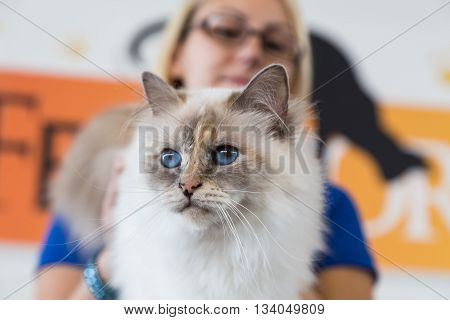 Beautiful Cat At Quattrozampeinfiera In Milan, Italy