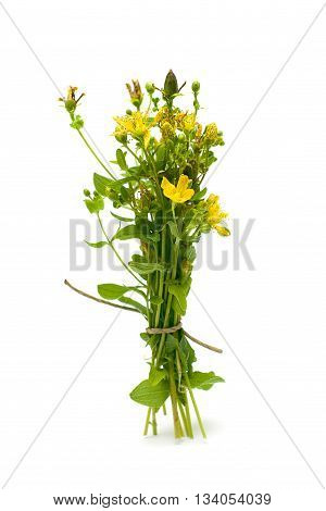 St. John's wort (Hypericum perforatum) isolated on white