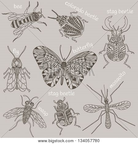 Hand drawn beetles set. Insects for design icons logo print or else. Bee mosquito wasp colorado beetle butterfly stag beetle fly. Vector illustration.