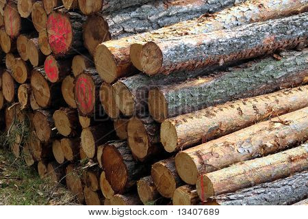 cut tree or log with annual rings poster