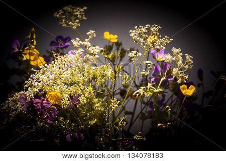 a bouquet of wild summer flowers for midsummer