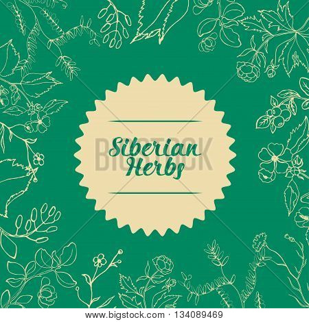 Siberian medicinal herbs vector illustration on a green background